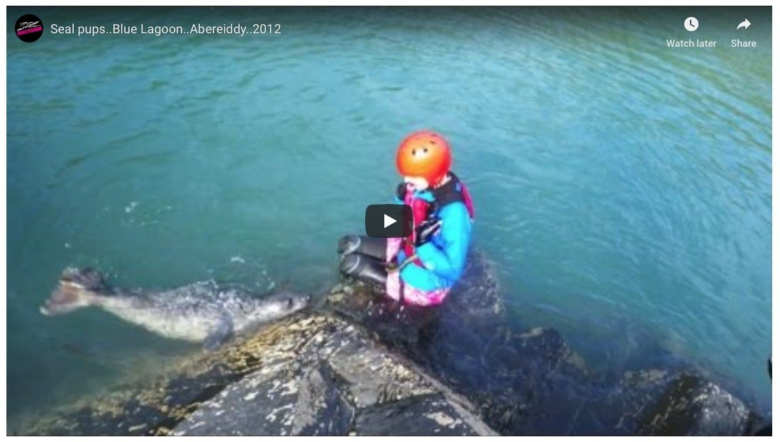 Coasteering with seal pups at Abereiddy Blue Lagoon Pembrokeshire. Coasteering is accessible to people with disability. The Celtic Quest team have experience working with people with a variety of challenges and abilities.